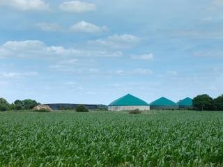 Biogas-Anlage im Maisfeld