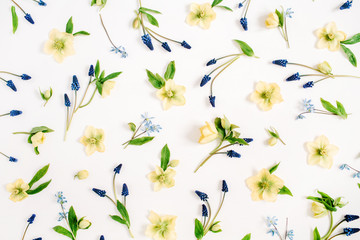Beautiful yellow hellebore flower, blue muscari flower and green leaf texture on white background. Flat lay, top view. Floral lifestyle composition.