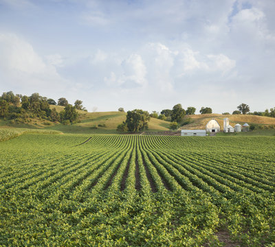 Midwestern Soybean field and farm hills