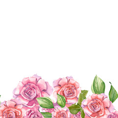 Pink Roses With Leaves Painted In Watercolor