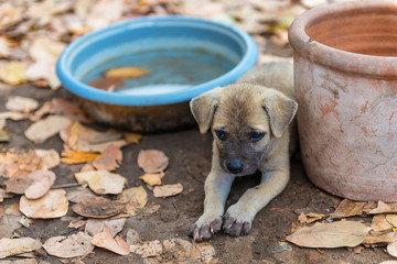 Puppies living in the temple.In Thailand.