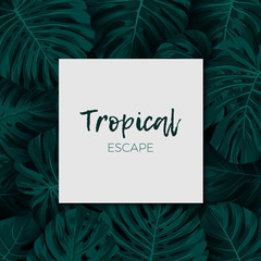 Dark green minimalistic vector design with exotic monstera palm leaves.