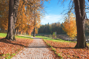 Trees with yellow foliage in autumn park.Colorful autumn landscape.