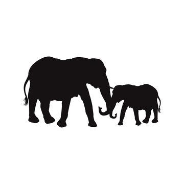 mom and baby elephants family animal wildlife