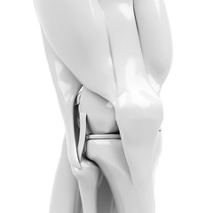 Anatomy of the knee. 3d rendered illustration