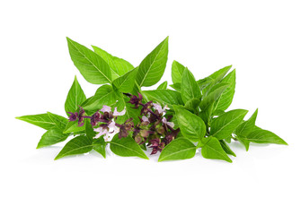 Pile of Fresh sweet basil or Thai basil and flower isolated on white background.