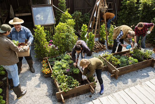 Group of people planting vegetables in greenhouse