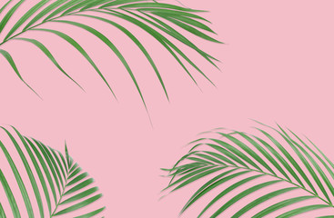 Tropical palm leaves on pink background. Minimal nature. Summer Styled.  Flat lay. High resolution 5500 x 3600 pixels in size