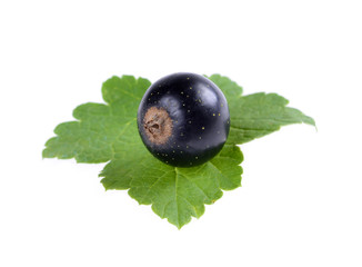 Black currant with green leaf isolated on white background.