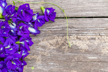 butterfly pea on wooden background