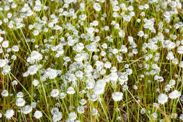 Flower on field