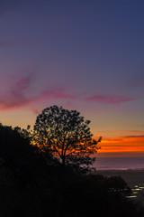 Silhouettes at sunset near the San Elijo Lagoon