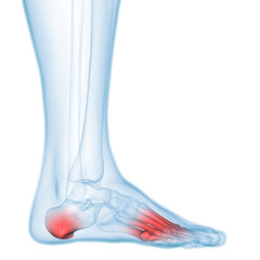 Human Body Bone Joint Pains Anatomy