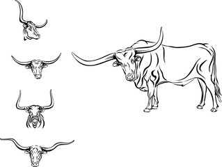 buffalo, bull, head, horns, vector, picture, longhorn