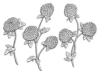 Clover flower graphic black white isolated sketch illustration vector