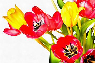 Cyfrowego obraz świezi tulipanowi kwiaty w kolorowym wiosna bukiecie na białym tle
