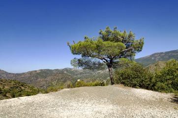 Cyprus hills