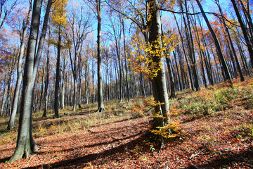 Sunny autumn day in the forest.