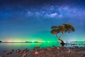 The milky way over big tree in tropical beach with night sky, Thailand