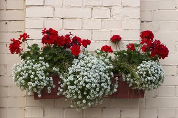 Potted flowers on the pillar