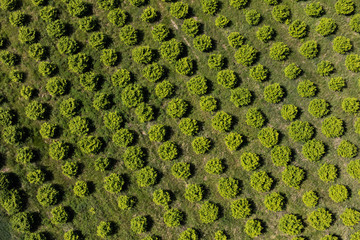 Photo sur Toile Vue aerienne aerial view of the orchard
