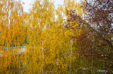 Autumn landscape. Yellow leaves on tree branches