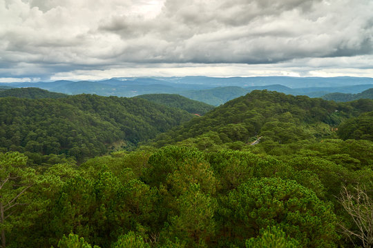 Pine forest - high angle view - from the Dalat Cable Car to the Truc Lam pagoda. Dalat, Vietnam.