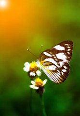 Beautiful butterfly eating sweet water from flowers in the garden.