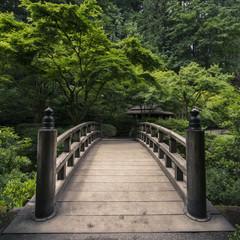 Bridge in forest japanese garden