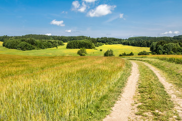 Canvas Prints Honey Road through fields - amazing summer countryside