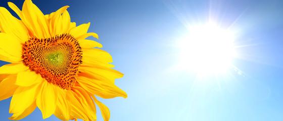 Wunderschöne Sonnenblume mit Form eines Herzens