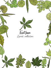 Vector drawn vertical background with isolated forest leaves. Forest collection.