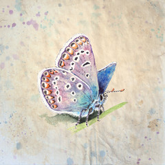 Copper-butterfly (Lycaenidae) realistic, vintage style watercolor illustration on textured grunge background. Beautiful blue butterfly sitting on a grass.