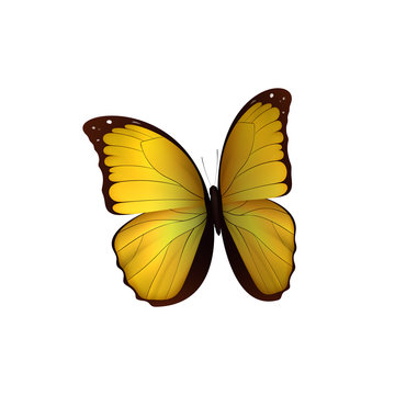 Butterfly yellow isolated on white background