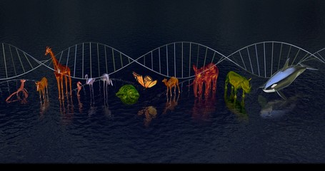 DNA molecule Biodiversity, variety of animals reflected in water.WIde view Front. DNA in background. 3d rendering Wall mural