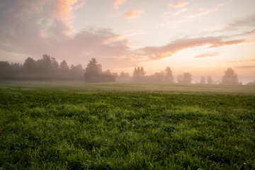 Misty meadow at dawn  Wall mural