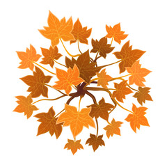 Orange plant or tree, top view. Vector illustration, isolated on white background.