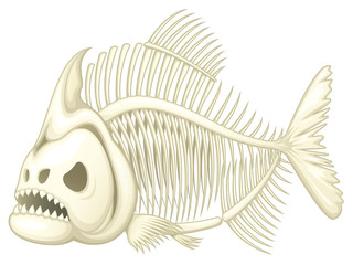 Vector illustration of a skeleton of a piranha fish.