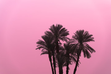 Silhouette of a group of palm tree against pink sky in Egypt.