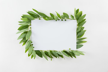 Top view of blank card with fresh green leaves isolated on white Wall mural