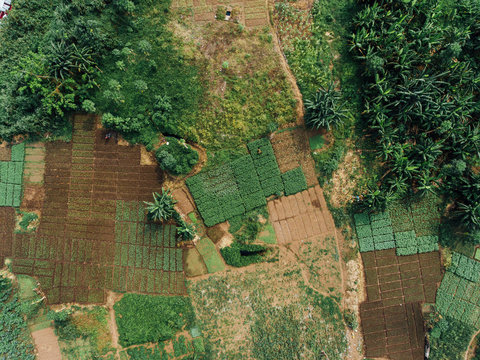 Aerial Photo of Agriculture in Africa