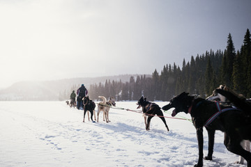 Arctic Sled Dog Expedition