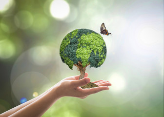 Environmental conservation, world wood day and sustainable environment for csr - corporate social responsibility campaign concept