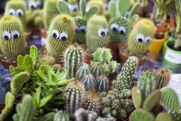 cactus flowers succulent