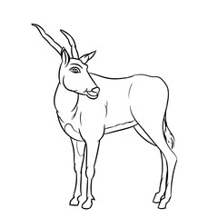 Line Drawing of Impala -Simple line Vector