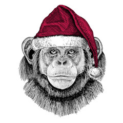 Chimpanzee Monkey Christmas illustration Wild animal wearing christmas santa claus hat Red winter hat Holiday picture Happy new year