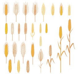 A set of different ears. Cereals plants elements for design
