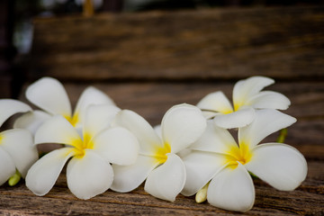 Frangipani flower/ Plumeria/ Temple Tree/ Graveyard Tree / wood background