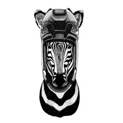 Zebra Horse Hockey image Wild animal wearing hockey helmet Sport animal Winter sport Hockey sport