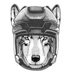 Wolf Dog Hockey image Wild animal wearing hockey helmet Sport animal Winter sport Hockey sport